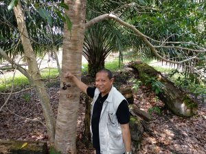 Options for trees on farms in Kalimantan, Indonesia