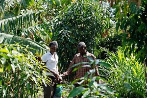 Strengthening agricultural research in Kenya