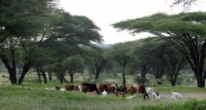 The potential of agroforestry to enhance Land Degradation Neutrality: case study from Tanzania