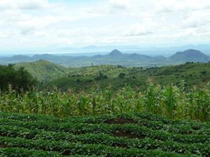 Agroforestry and land health in Malawi
