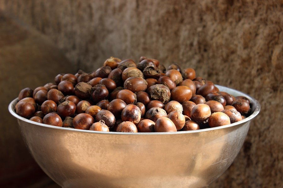 Shea nuts. Photo: World Agroforestry Centre/Joan Baxter