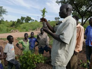 Refugees impatient for seedlings as UK MPs open new season of agroforestry and other tree-based solutions in NW Uganda