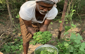 In Andhra Pradesh, ICRAF starts deep dive into science of Zero-Budget Natural Farming
