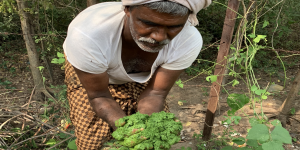 In Andhra Pradesh, World Agroforestry dives deep into the science of Zero-Budget Natural Farming