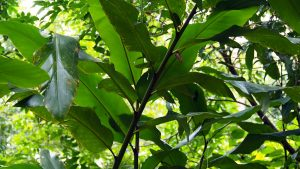 Mekong Expert Group on Agroforestry: impact on ASEAN