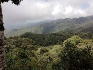 Trees on farms in Honduras: a chance for biodiversity