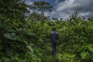 What Cameroon can teach others about managing community forests