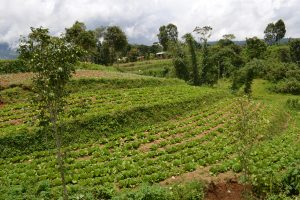 PHOTOSTORY: Agroforestry in response to key global issues