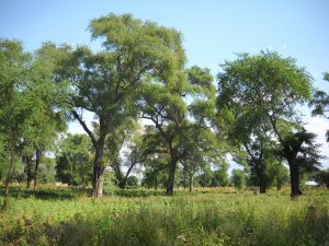 Looking for the right tree for the right place? Agroforestry Species Switchboard Version 2