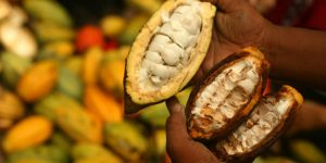 Public–private–people partnership for cocoa and forests in Côte d'Ivoire
