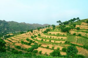 Successful agroforestry options in Viet Nam