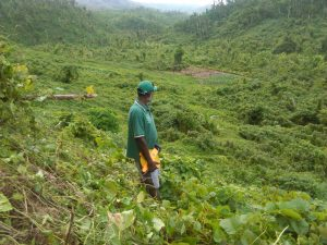 From Jamaica to Togo to Vanuatu, agroforestry helping countries prevent climate collapse