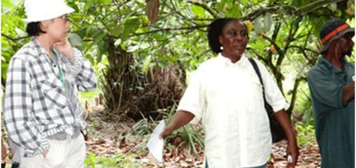 cocoa, agroforestry, Cameroon, extension