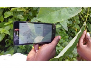 Field testing of the new vegetationmap4Africa App. Photo by Roeland Kindt/ICRAF