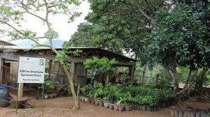 Part of ICRAF's tree domestication and experimentation nursery in Yaoundé, Cameroon. Photo by Daisy Ouya/ICRAF