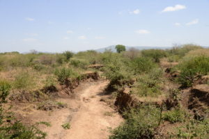 Farmers restoring drylands in Kenya